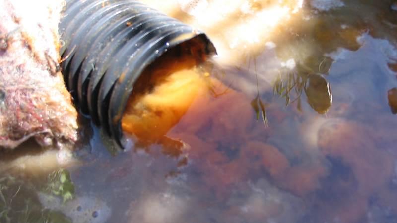 Især i den første tid efter en nydræning på okkerholdige jorde skal man være opmærksom på at skylle drænet for det besværlige materiale, der kan sætte sig stenhårdt inde i drænet. Foto: HS Dræning