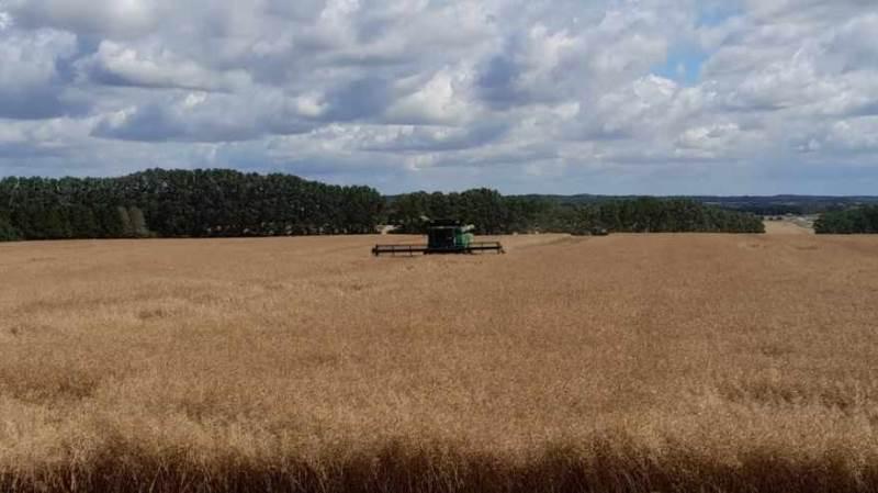 Syd for Slagelse gik gårdejer Henning Buhl Madsen over middag mandag i gang med at høste vinterraps. - Men vi stoppede igen ret hurtigt, da vandprocenten lå på 11 procent, fortalte han ved 15-tiden.
