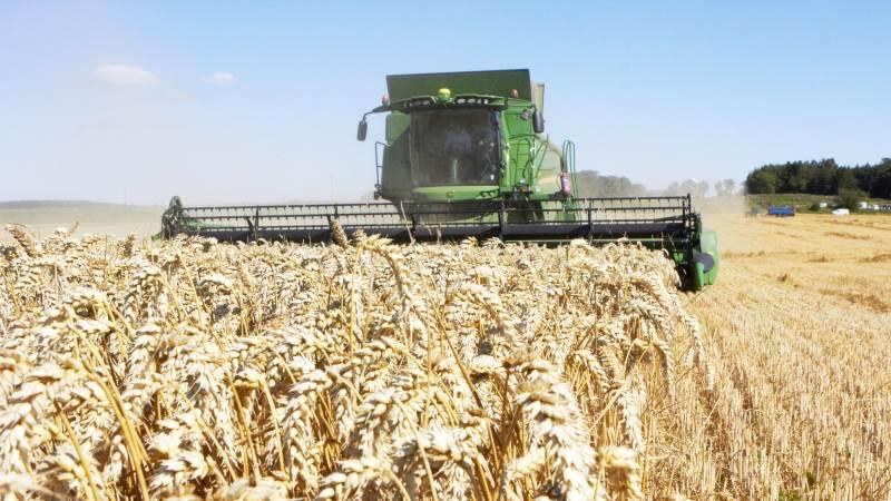 Årets hvedehøst vurderes som middel og gennemsnitlig – både i Vestjylland og på landsplan. Arkivfoto