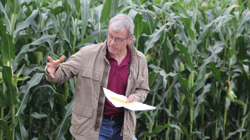 Majsforædler, Jens Bagge fra Sejet Planteforædling drog et lettelsens suk, da han kunne konstatere, at majsplanterne stort set har indhentet den sene såning.