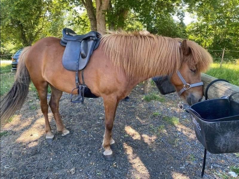 Det er vigtigt at ændre sadlen, så den løbende tilpasses hesten. Foto: Karina Laugaard Kristensen