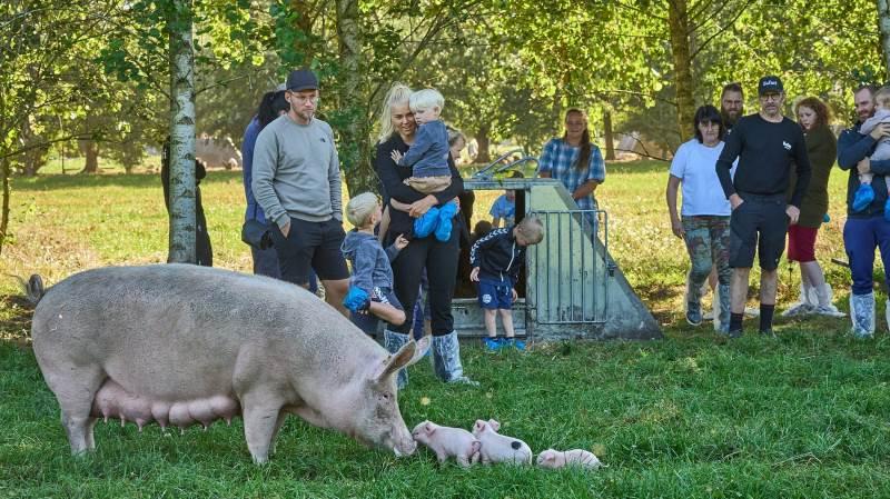 Stor interesse for at se på de økologiske grise, som her hos Brian Holm ved Brørup.