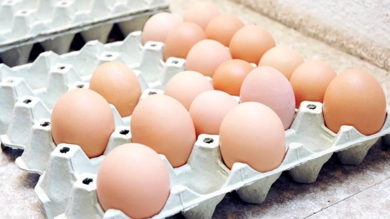 Omkring 85 procent af de æglæggende høns i Danmark går rundt med brud på brystbenet, viser ny forskning fra Københavns Universitet.