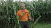 Ken Brink, produktchef hos KWS, maner til besindighed i forhold til majssåningen. - Majs stiller store krav til jordtemperaturen under spiringen, så skynd dig langsomt, råder han. Arkivfoto