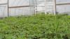 Økologiske jordbær er blot et af mange produkter hos Helges Most & Grønt, hvor mangfoldighed bliver prioriteret frem for kvantitet.