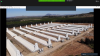 Med 24 nye og topmoderne svinestalde er den seneste af foreløbig fem svinefarme i produktionsselskabet Agricola Coexca i Chile taget i brug. De 14 meter høje ventilationsskorstene ved gavlene er for at forebygge lugtgener og emission til omkringboende. Fotos: Agricola Coexca