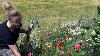 Interessen for at plukke blomster har været stor.
