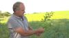 Godsforvalter Olav Ditlevsen har tidligere dyrket kikærter i Australien. Nu har han taget afgrøderne med til Danmark.