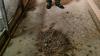 Hver gang, han kommer ind i stalden, kan Ole Vorre se på en stor bunke afføring fra de fugle, der tidligere var i hans besætning. Der er ikke gjort rent efter det.