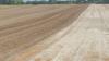 Mark 1: Massivt spiret græsukrudt effektivt nedvisnet to gange med glyphosat. Fotos: Hans Jørgen Bak