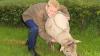 12-årige Jonathan er rigtig glad for fårene, og han stiller gerne op som trækker på dyrskuerne.