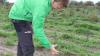 Martin Viborg viser her en sitkagran, som kun er groet 10 centimeter, siden den blev plantet. - Den har brugt krudtet på at få rodfæste, fortæller han.