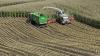 Majssnitteren og tre frakørselsvogne fra Allestrup Maskinstation arbejder på 2. dag i Per Hougaards majsmarker nær den østjyske motorvej lidt nord for Hobro.
